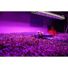 Programmable LED Experimentation System (CI-800)